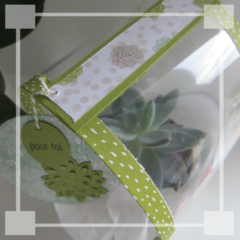 Mini serre succulentes pour Angie (4)