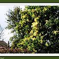 Camélias, Mimosas et Lac 270118
