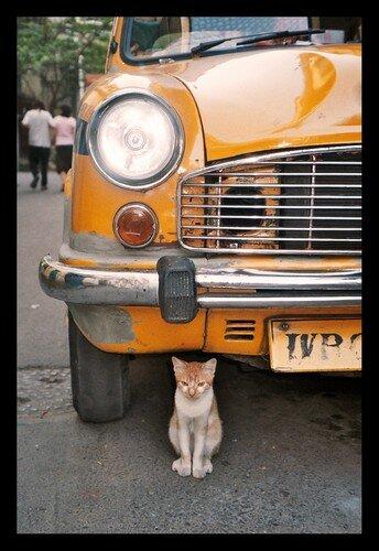 Cat-cutta