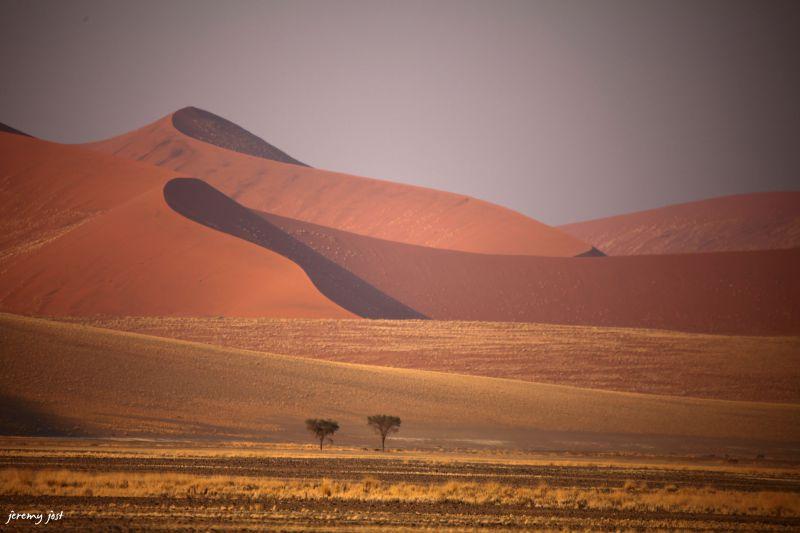 Namib desert lines