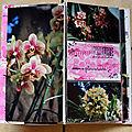 Orchidées-6