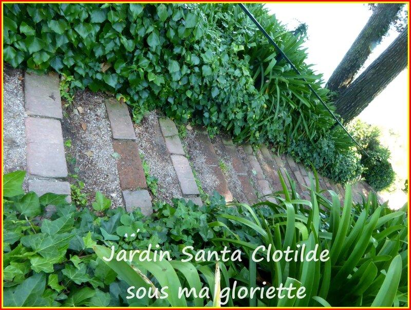 santa clotilde29