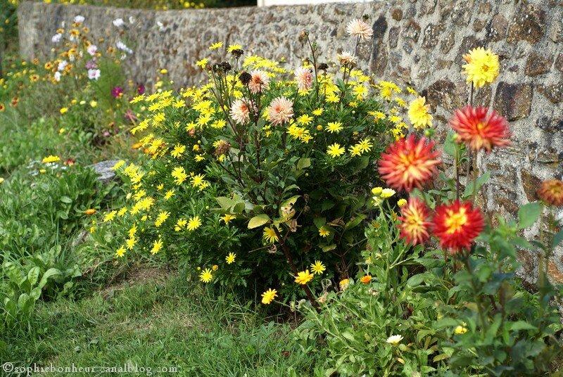 Automne fleurs