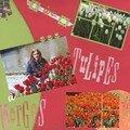 Parc de tulipes à Morges
