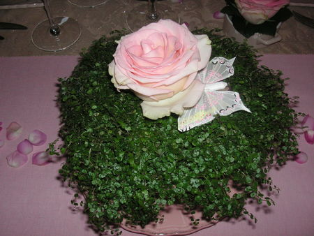 table_rose_f_te_des_m_res_001