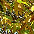 Promenade en automne 2012