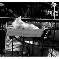 Chiffon : petit chat acrobate