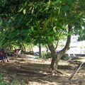 Ekoulougound'a Mangaba bwéya bihi ndedi di dibo di tké ndé dahou