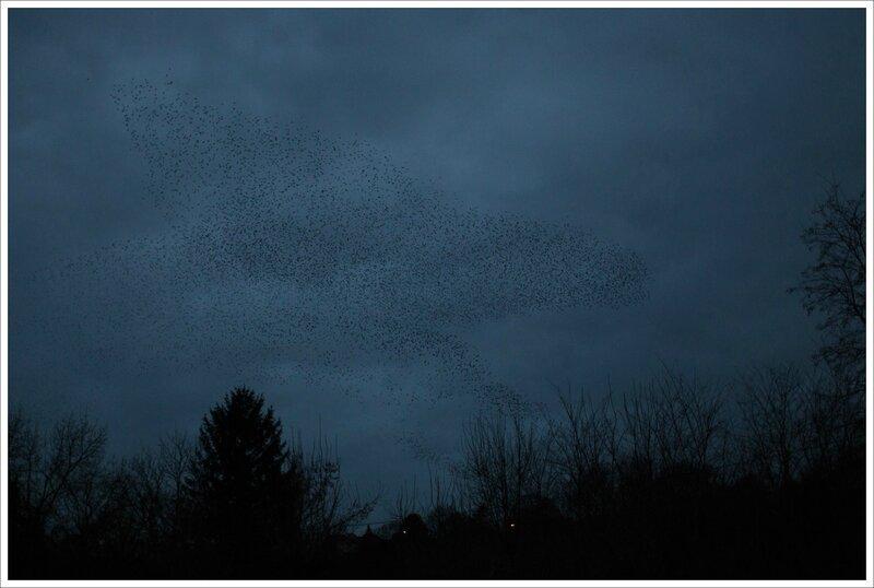 ville etourneaux nuage soir 010216 3