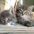 chatons_26