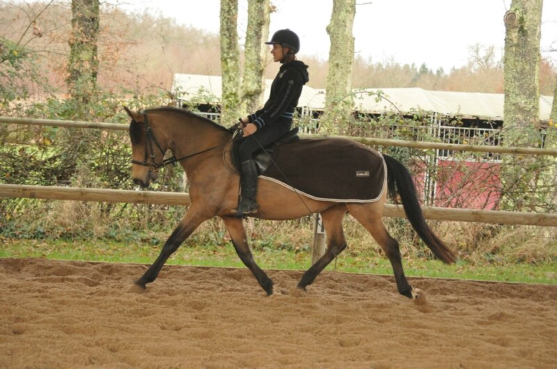 20/12/14 Allongement au trot