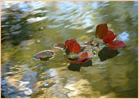 au_fil_de_l_eau