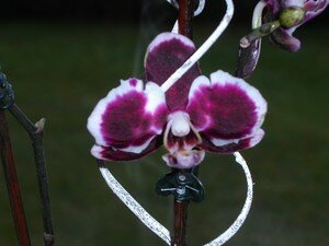 orchid_3103_014
