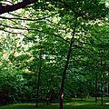 Bois-de-Coulonge-SentierMMSéminaires-06