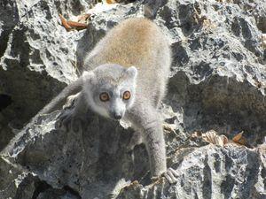 Madagascar 2011 377