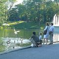 les canards du parc Lafontaine