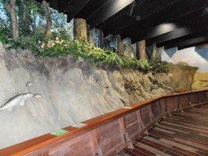 Grand Aquarium de Touraine (6)