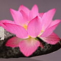 La zen attitude