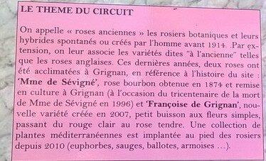 roses anciennes définition