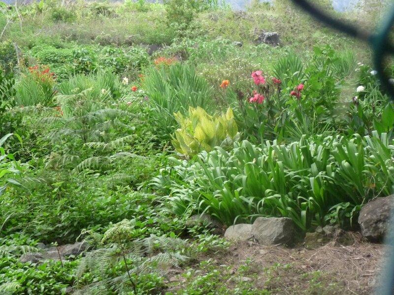 jardin à Ilet à malheur