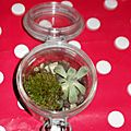 Calendrier de l'Avent - Jour 21 ~ Petit terrarium  offrir ou  garder !