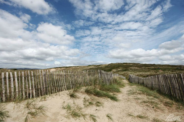Dunes_IMG_3639