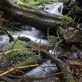 2009 04 20 Un petit ruisseau à côté du Lignon vers Mars en Ardèche en bordure de la Haute-Loire (19)