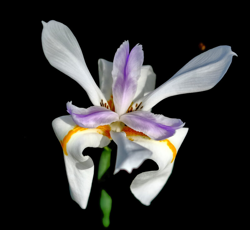 flower-in-the-night_28350574009_o