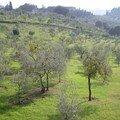 jardins de Galilée à Arcetri
