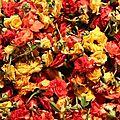 Mini roses coupées, Parish Corner, Chennai, Inde - Photo ML Henry