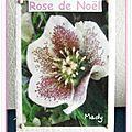 326 rose de Noël pour tortue