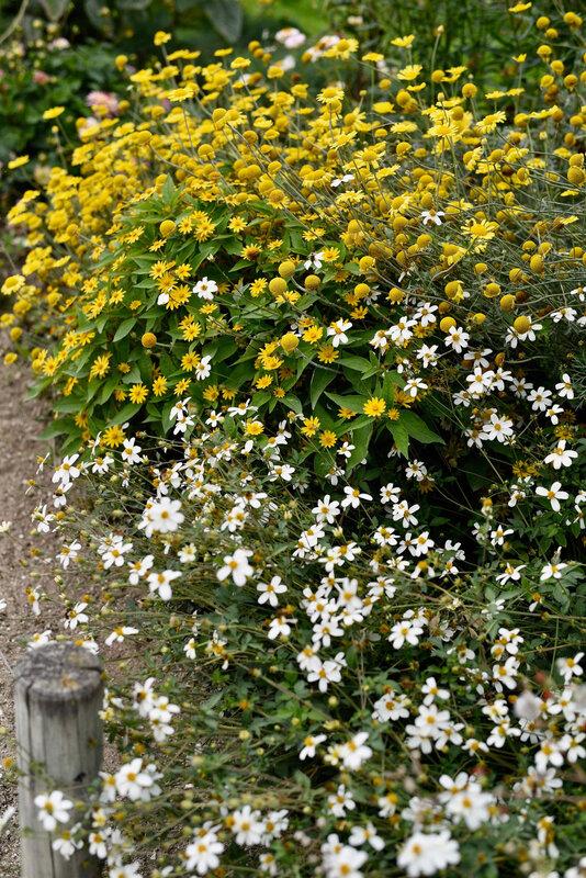 bosquet de fleurs bicolore - 1
