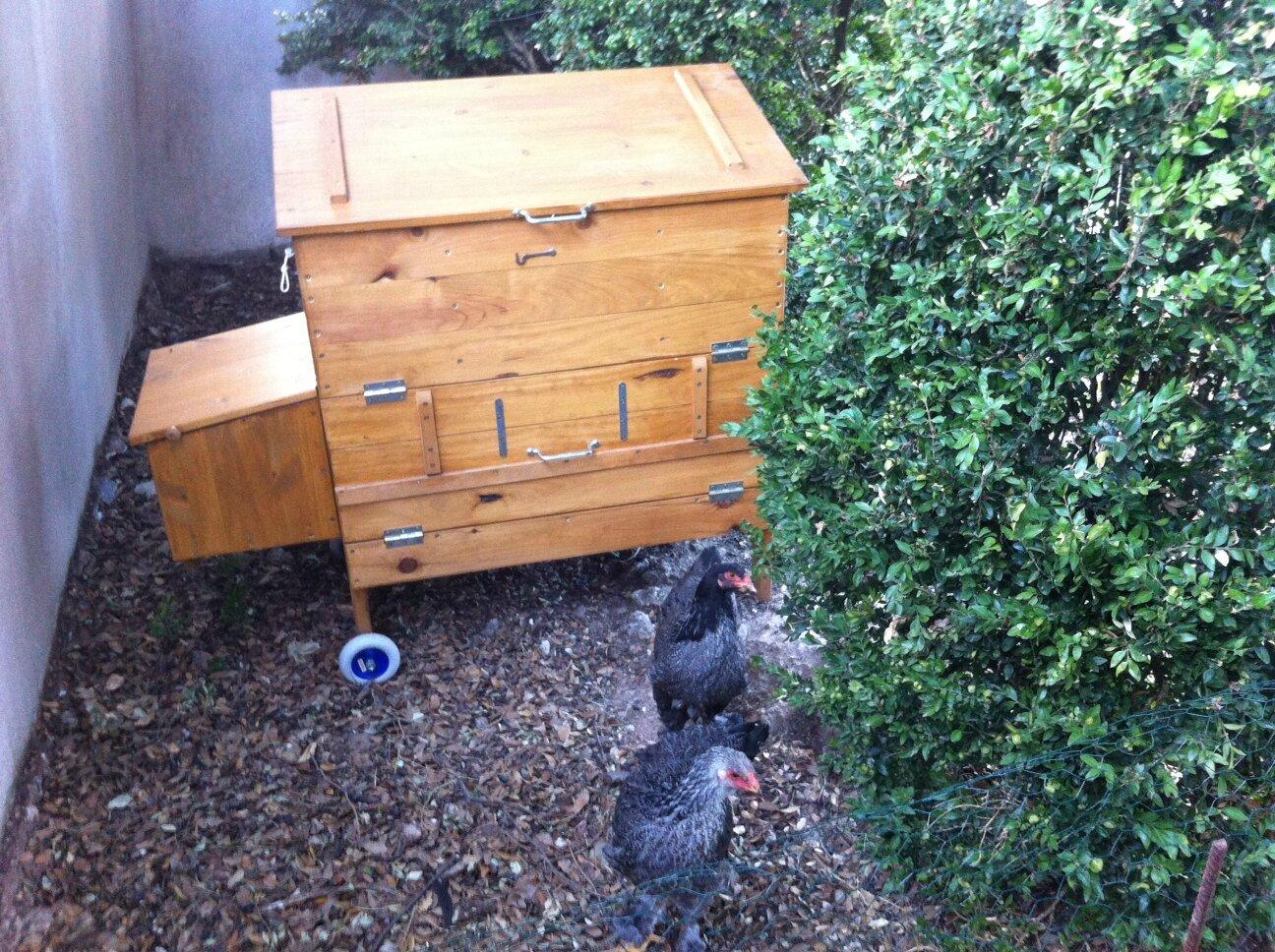Anne a choisi le poulailler coffre pour ses poulettes.