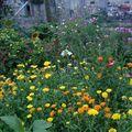2009 08 17 Une partie de mon jardin en fleur