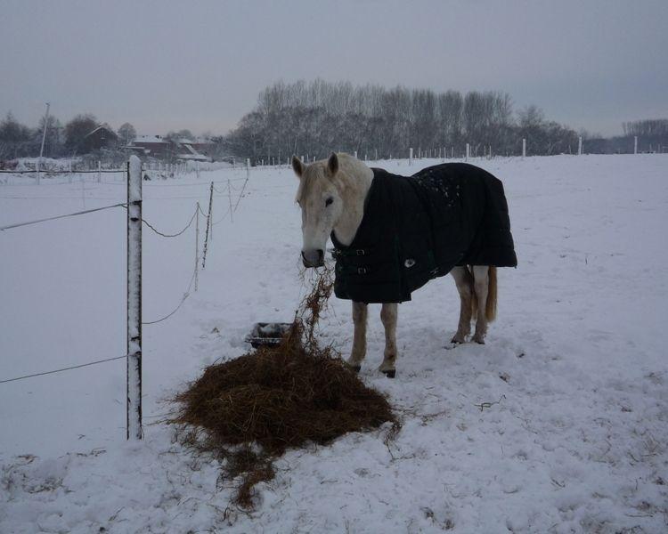 2010 décembre hakkam 4