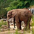 Elephant-(9)HR