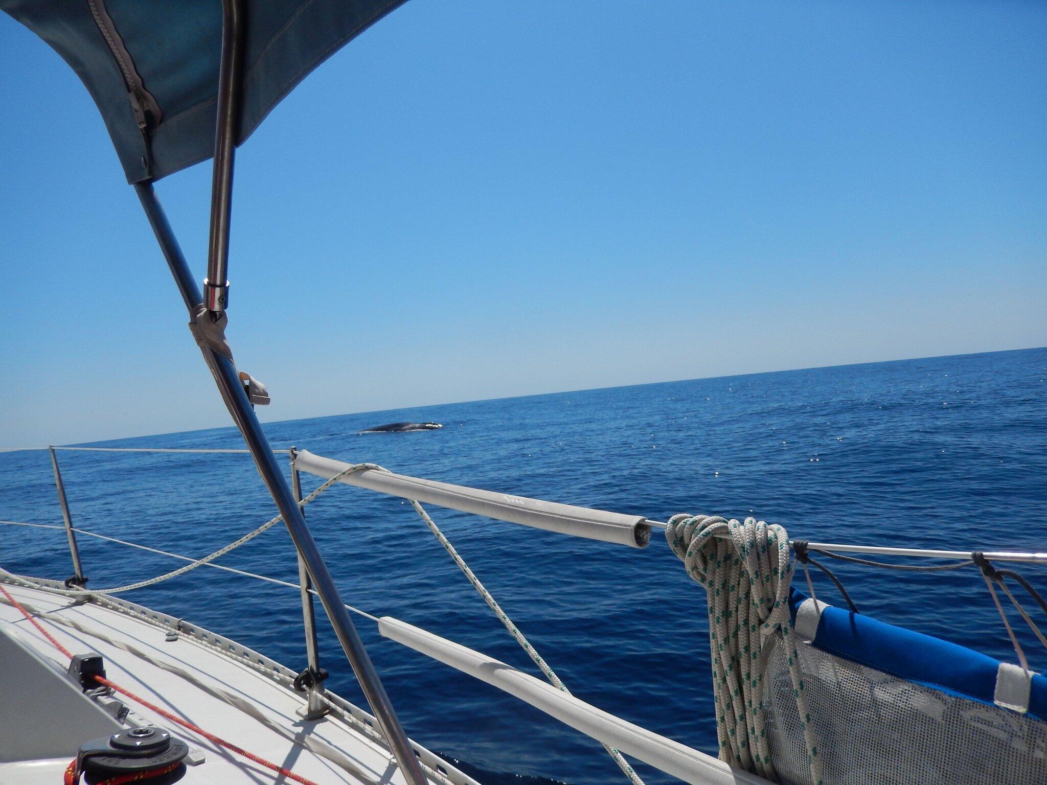 Publié en partie Baleine au large de la Corse 020815