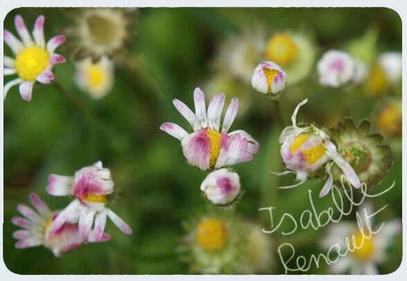 mon_jardin_31