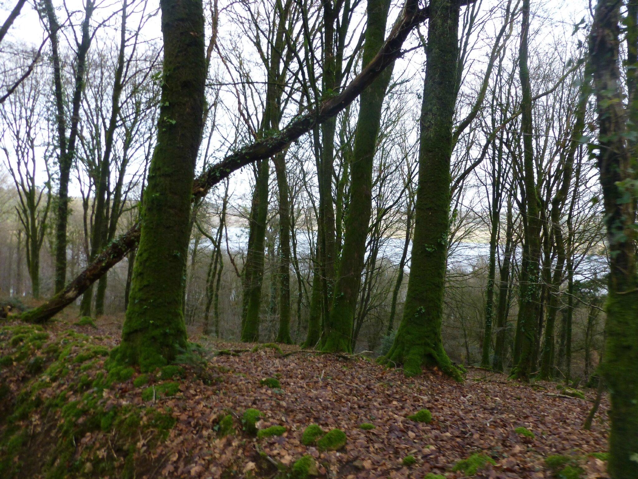 Balade à cheval dans la forêt P1080282