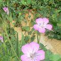 fleurs juillet 2010 049