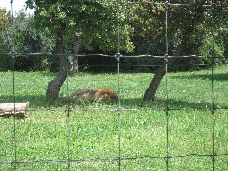 zoo 057