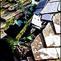 Courcelles la forêt (sarthe)