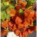 526 - en fleurs aux couleurs du temps ...