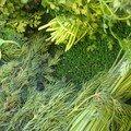 Couper la ciboulette ou autres herbes