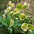 Fleurs 2009 (2)