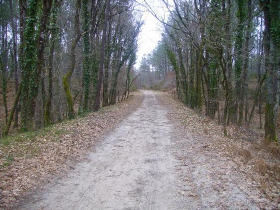 Photo-chemin-ancienne-voie-ferrée-entre-Escource-et-Jouanicot-bis