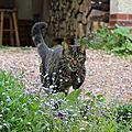 Pixouille de jardin