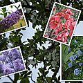 Fleurs 2009-2010 (3)