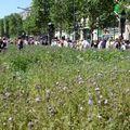 Champs Elysées_Capitale Nature (80)