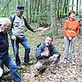 formation de l'humus en sous bois